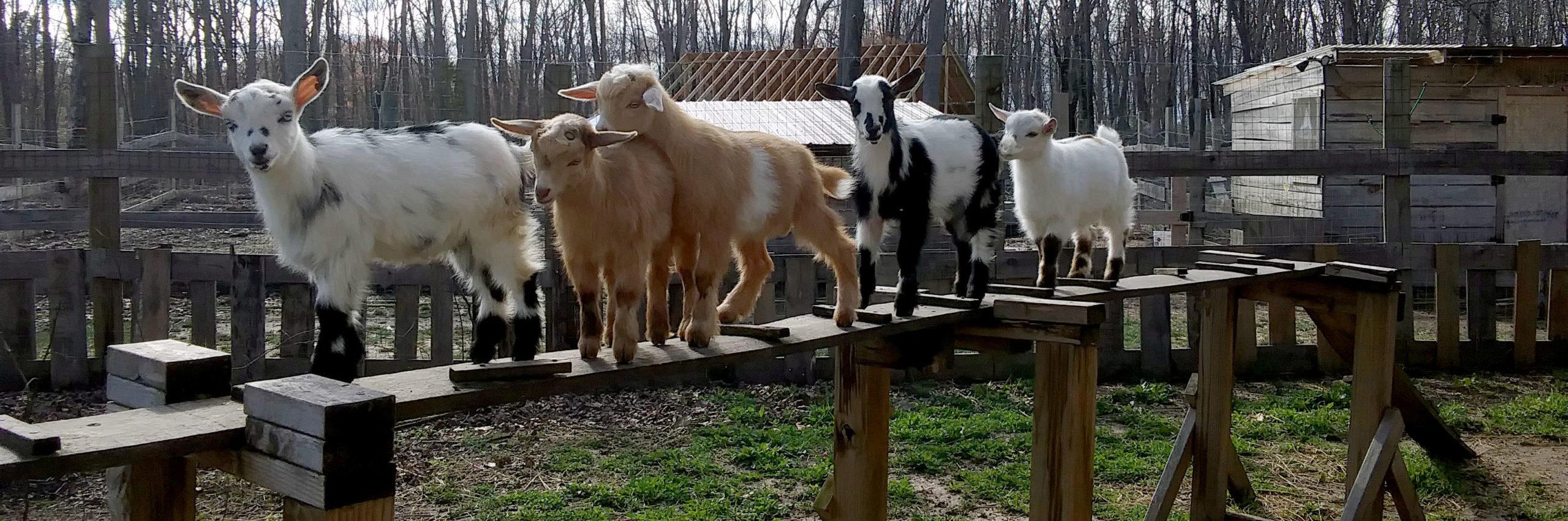 Durkin Family Farm